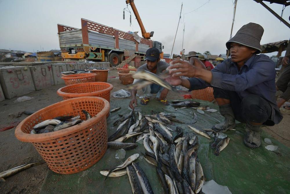 Pêcheries à Kampong Chhnang. Photographie Sylyvann Borei - WorldFish (cc)