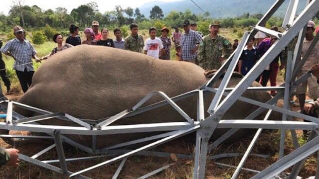 Mort d'un éléphant sauvage aux abords des Cardamomes