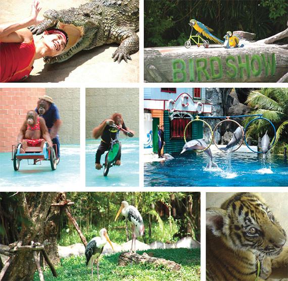 Phnom Penh : Safari World dans la capitale. Photographie fournie