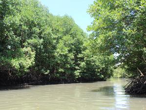 Cambodge & Environnement : Protéger la mangrove du Royaume pour son rôle vital