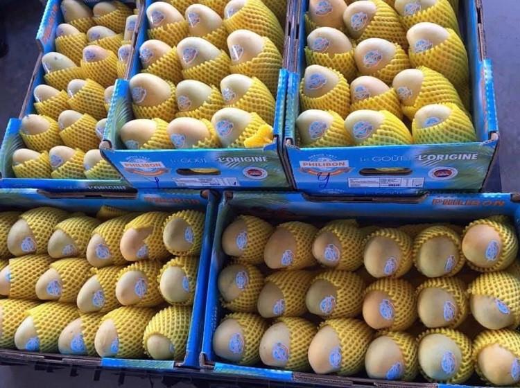 Le Cambodge est en mesure de produire environ deux millions de tonnes de mangues fraîches par an