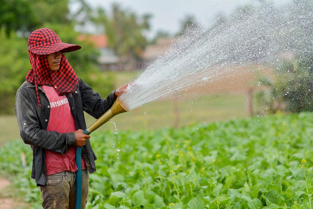 De nombreux défis pour l'agriculture cambodgienne