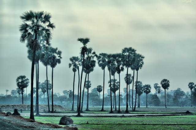 Campagne cambodgienne à l'aube