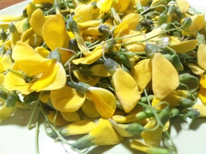 Fleurs de sesbanie de Java par Pascal Médeville