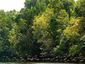 Destination & Écotourisme : Dans les Cardamomes, Votre séjour sauve la forêt…