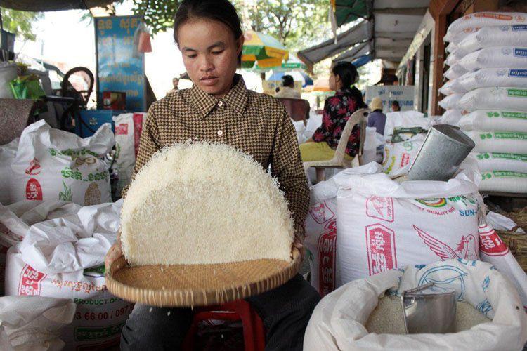 La Chine reste le premier client pour le riz cambodgien