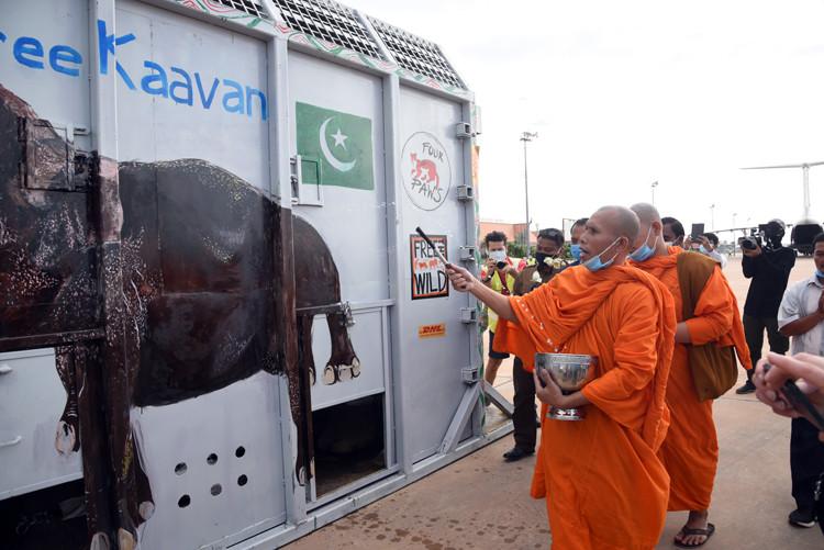 Bénédiction bouddhiste pour Kaavan