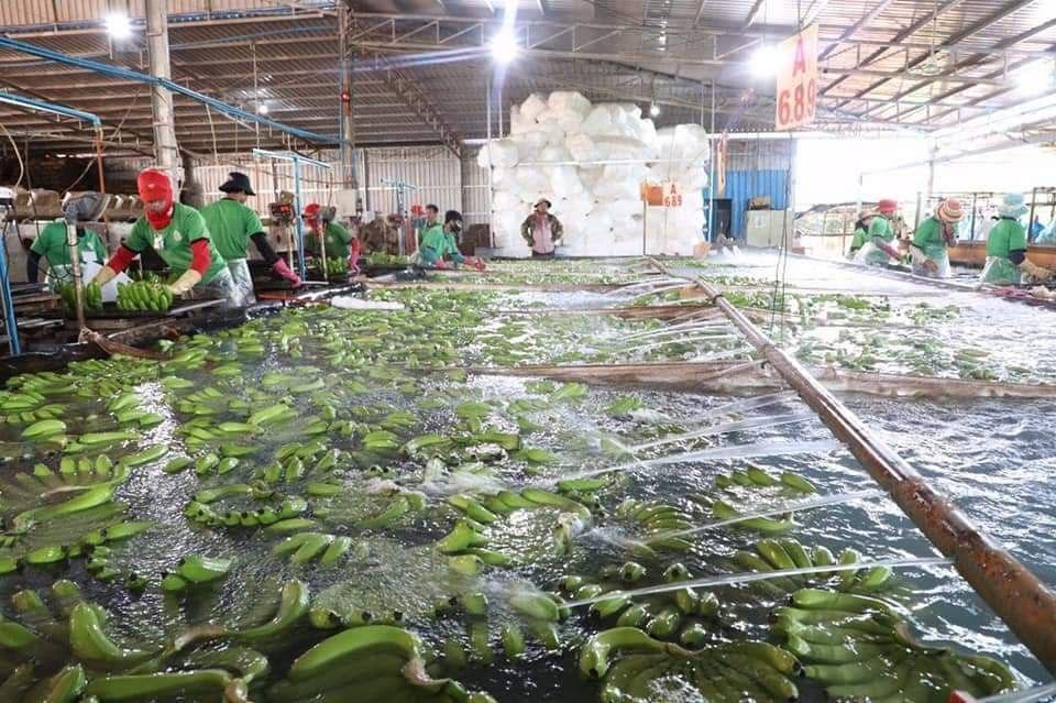 l'entreprise Long Sreng International Co., Ltd dans la province de Kampong Cham