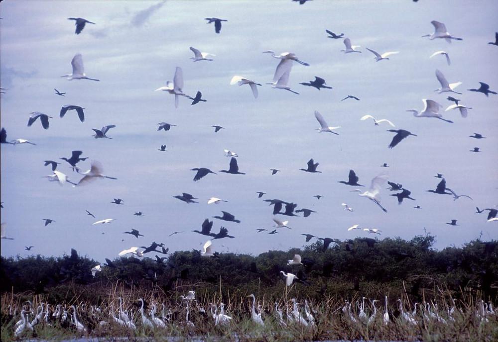 la richesse de sa population ornithologique attire des visiteurs venus du monde entier
