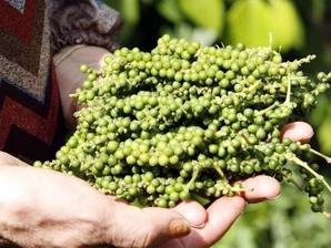 Cambodge : 3,4 millions de tonnes de produits agricoles exportés au cours des sept premiers mois