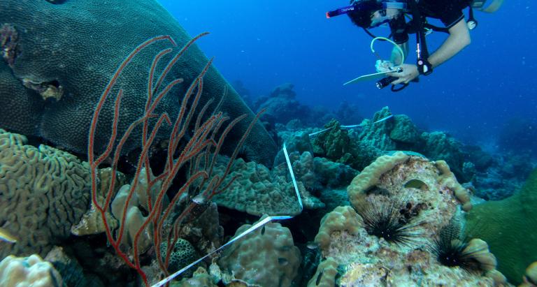 Le retour du corail ? Des signes de rétablissement pour la première aire marine protégée du Cambodge