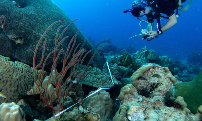 L'équipe a utilisé des transects pour enregistrer les espèces de poissons et d'invertébrés. Crédit: Matt Glue / FFI