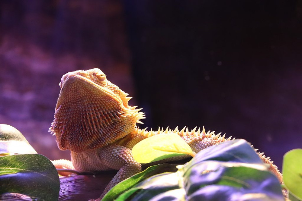 Découvrir Fantasea Aquarium KH