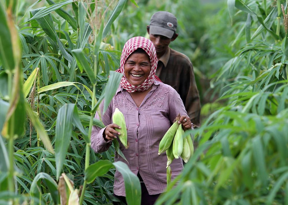Tirer profit de la pandémie pour développer le secteur agricole