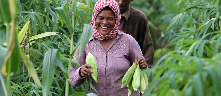 Cambodge : Tirer profit de la pandémie pour le secteur agricole