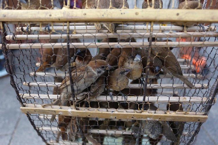 Relâchement d'oiseaux