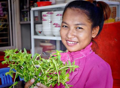 Produit du Cambodge : M'âm, l'herbe à paddy ou ambulie aromatique