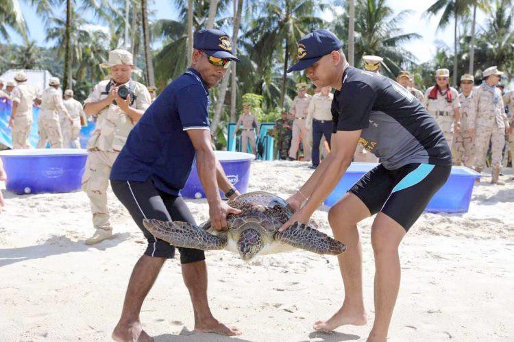 Lâcher de tortues marines à l'île de Koh Rong