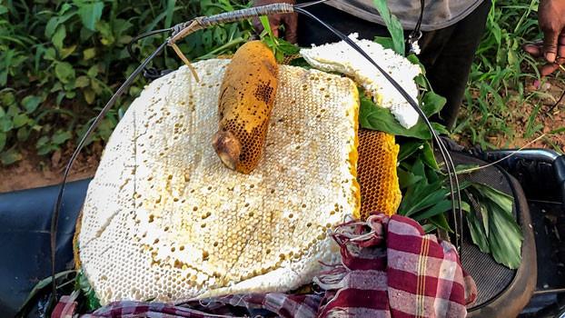 Un nid d'abeille et une ruche sont exposés sur un siège de moto dans la province de Koh Kong