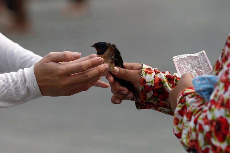 Relâchement d'oiseaux, Certaines habitudes peuvent avoir de lourdes conséquences