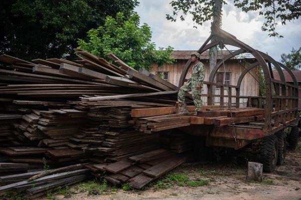 Saisie de bois abattu illégalement