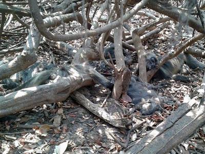 cambodia-dead-monkeys-battambang-province-apr28-2016-400.jpg