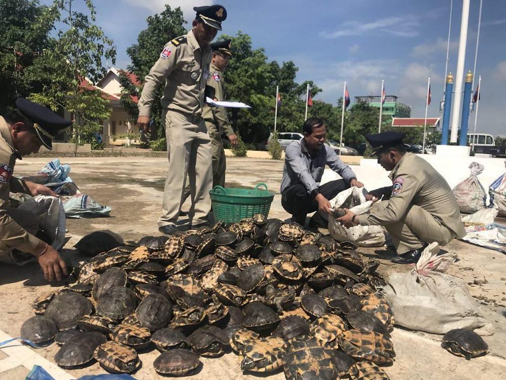 618 tortues et 70 varans saisis à la frontière thaïlandaise