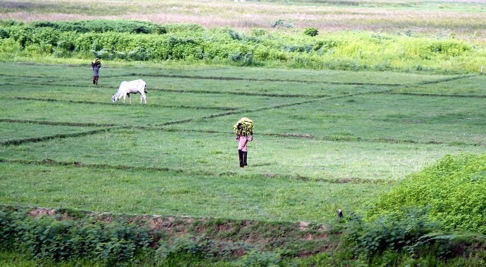 Agriculture - Santé : Réduire l'utilisation de produits agrochimiques sur les cultures. Photographie Stephen McGrath (cc)