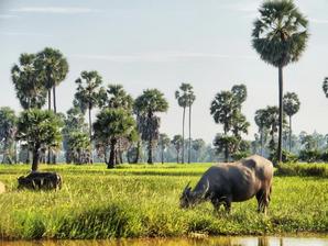 Tourisme & Destination : En passant par la province de Kampong Thom (កំពង់ធំ)