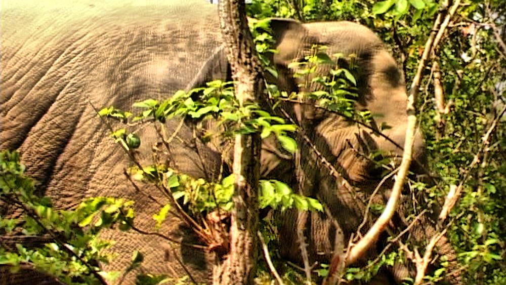 La faune du Ratanakiri comprend essentiellement les éléphants d'Asie, les gaurs et les singes