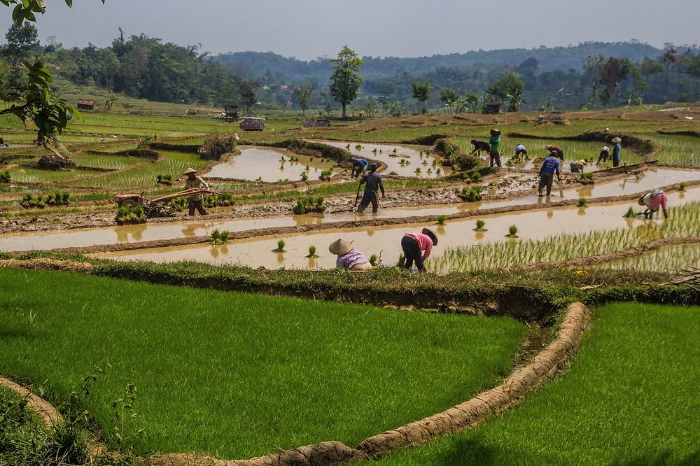 Indonésie. Image Jo Pi (cc)