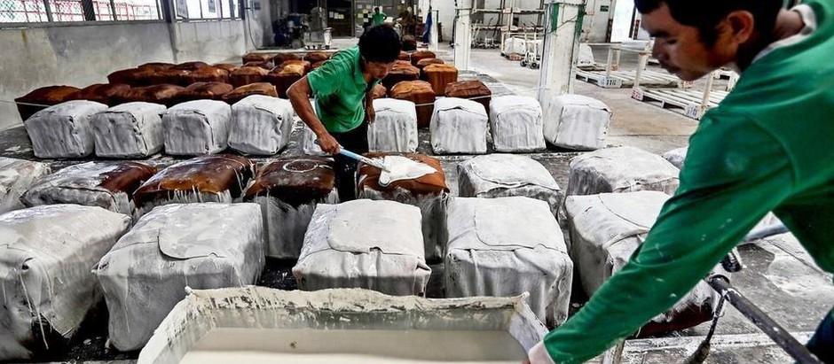 Agriculture : Prix en baisse mais bonne performance de l'export de caoutchouc