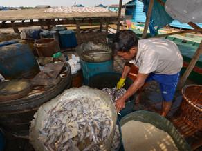 L'Union européenne soutient les communautés de pêcheurs du Tonlé Sap et des provinces côtières