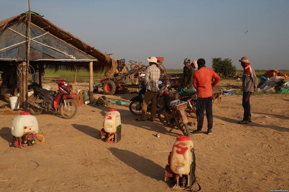 les ouvriers se préparent à pulvériser des pesticides dans la rizière de la province de Kampong Thom,