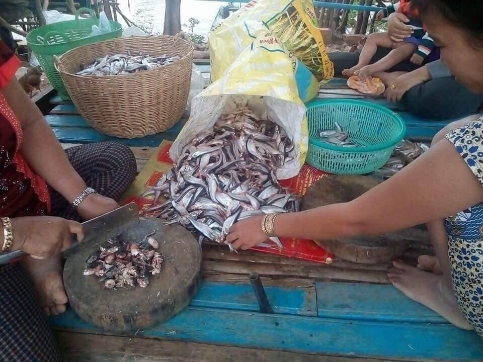Hachage des poissons