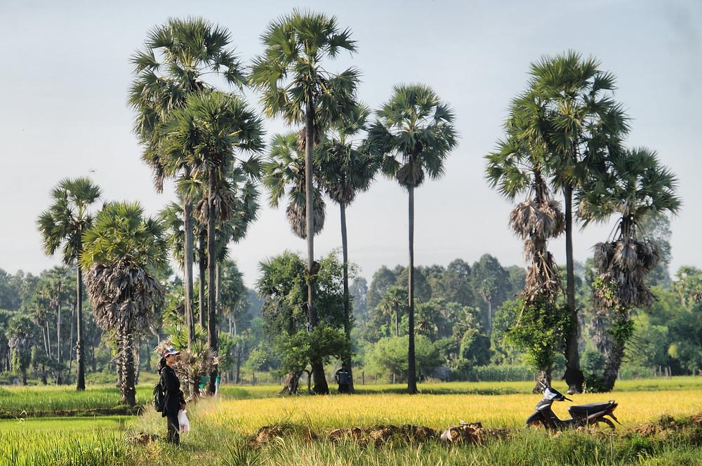 La campagne de Kampong Thom