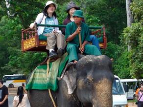 Tourisme – Nature : Fin des promenades à dos d'éléphant à Angkor Wat