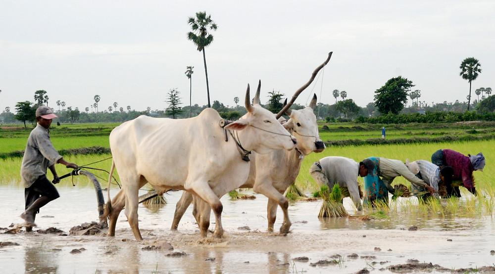 Aide d'urgence pour les petits agriculteurs et les sans-emploi dans le nord-ouest