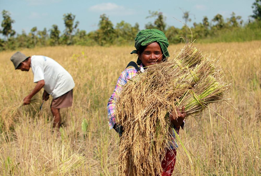 Le Cambodge a publié officiellement le rapport de l'enquête sur l'agriculture au Cambodge 2019