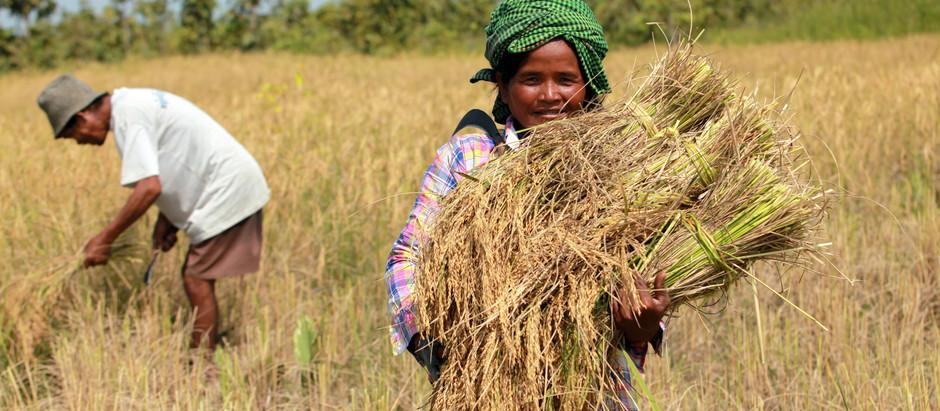 Cambodge & Coopération : 91 millions $ pour l'agriculture et contre le changement climatique