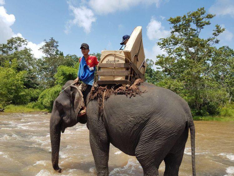 Insolite : Documents électoraux à dos d'éléphant