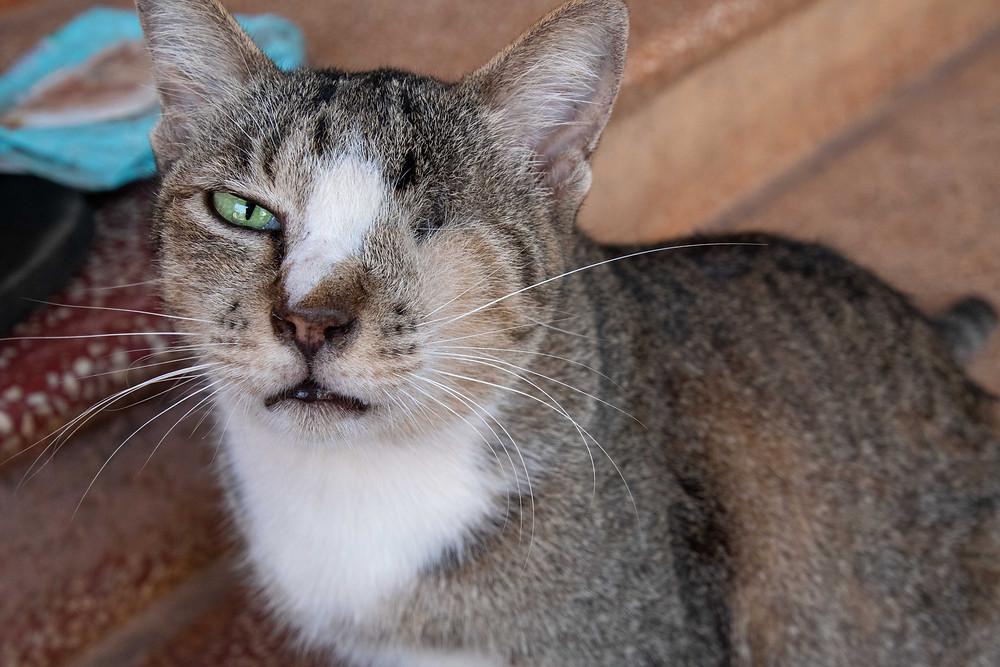 L'un des chats blessé et secouru par Josette Vanneur