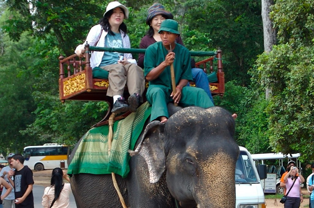 Fin des promenades à dos d'éléphant à Angkor Wat