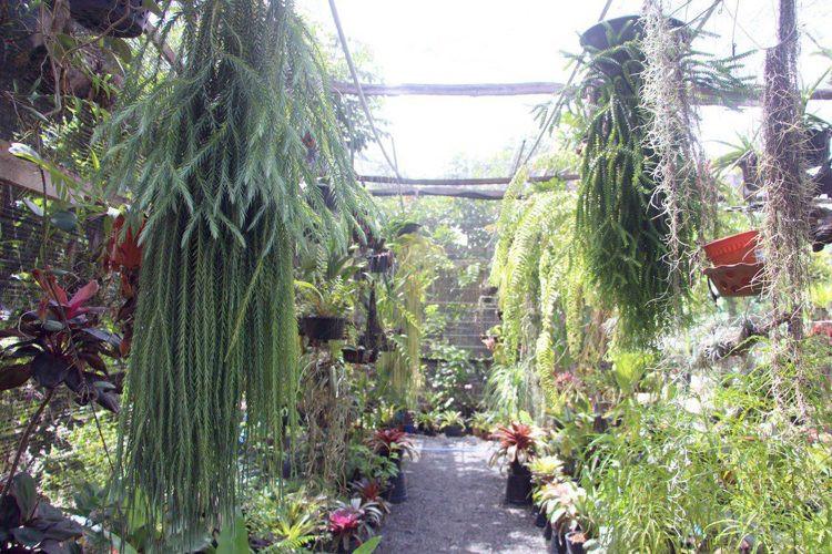 Bloom Garden Green House