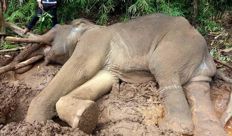 Mort d'un éléphant ''puni'' par son propriétaire...