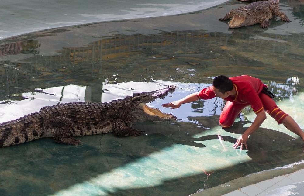 Un animateur lors du crocodile show