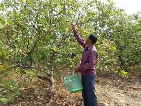Projet & Agriculture : Sept millions $ pour les petits exploitants de noix de cajou et de manioc