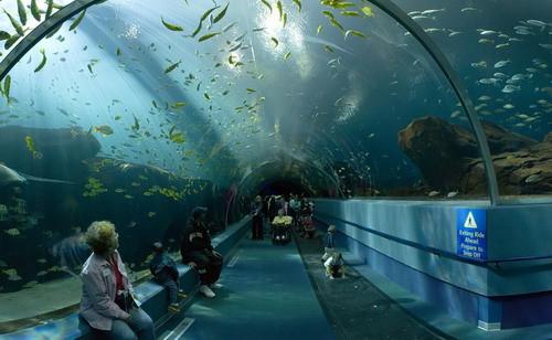 Simulation 3d d'aquarium géant