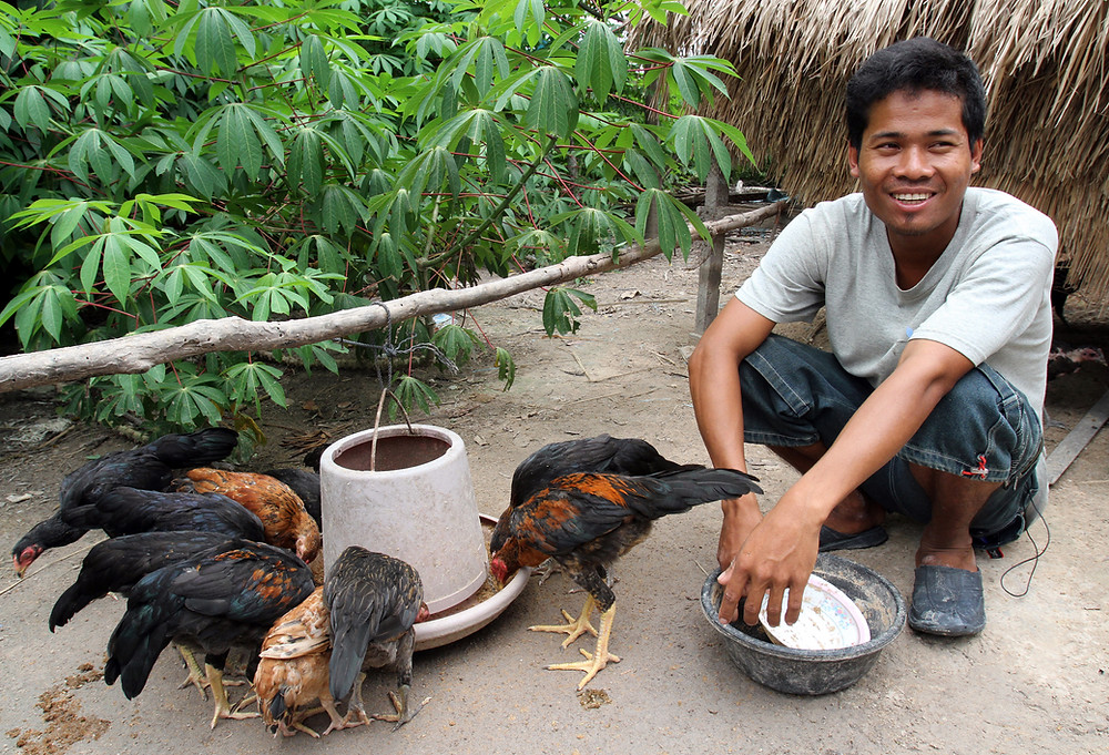 renforcement de cinq filières porteuses que sont le manioc, la mangue, la noix de cajou, le maraîchage et la volaille
