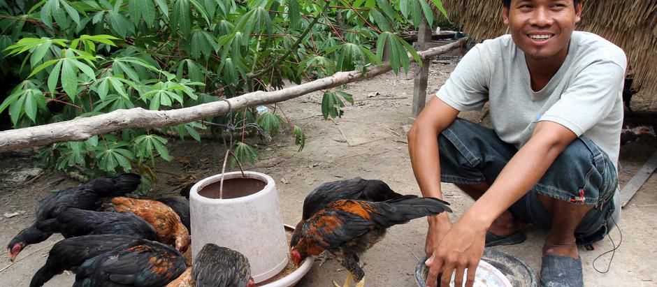 Coopération : AFD, Japon, ASEAN et BAD s'engagent pour  l'agriculture cambodgienne